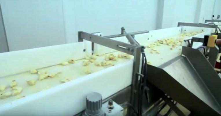 La industria alimenticia ayudando la gastronomia